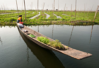 Floating gardens on Inle Lake. Since the lake is very shallow, the fields and beds are anchored in the bottom of the lake with poles @ Birgit Neiser